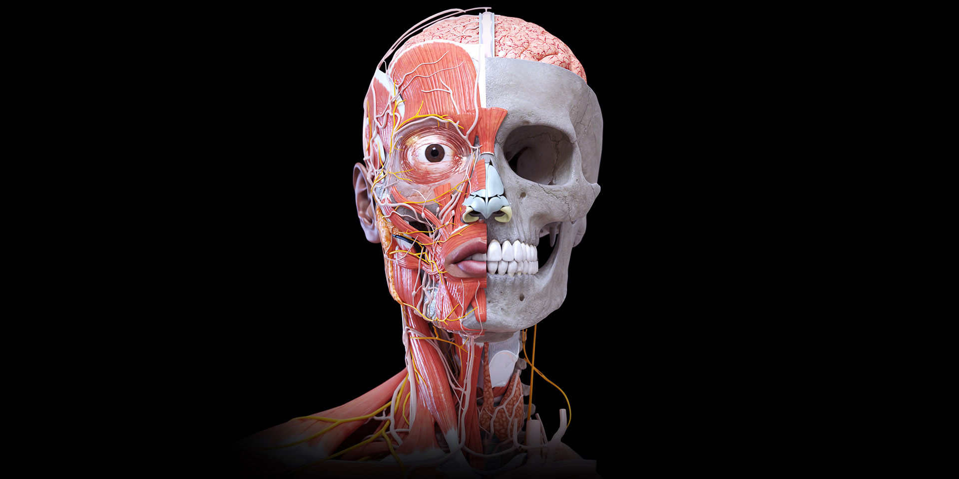 The Best Ipad Apps For Toddlers New Atlas >> Anatomy 3d Atlas Anatomy 3d Atlas Human Anatomy Apps