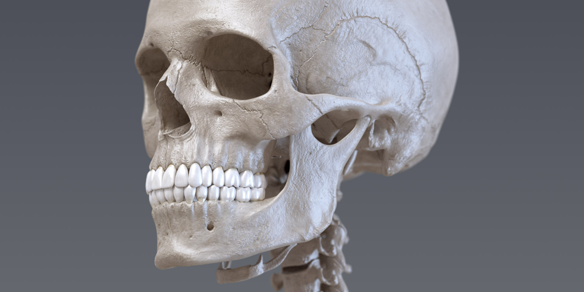 SKELETON - Anatomy 3D Atlas - Human Anatomy Apps