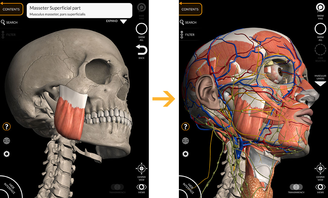 ANATOMY 3D ATLAS - Anatomy 3D Atlas - Human Anatomy Apps